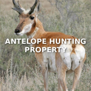 Antelope Hunting Property