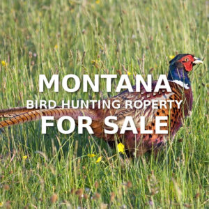 Montana Bird Hunting Property For Sale