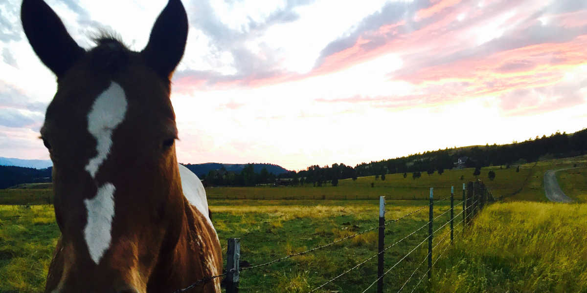 Montana Horse Property