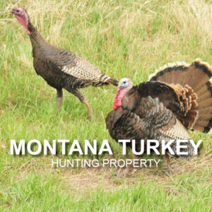 Montana Turkey Hunting Property