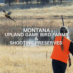 Montana Upland Game Bird Farms And Shooting Preserves