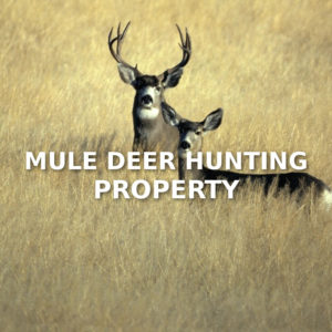 Mule Deer Hunting Property