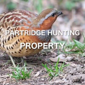 Partridge Hunting Property