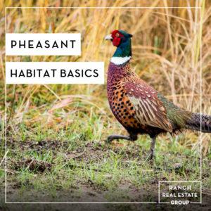 Pheasant Habitat Basics