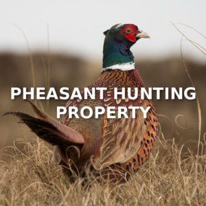 Pheasant Hunting Property