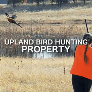 Upland Bird Hunting Property
