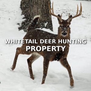 Whitetail Deer Hunting Property
